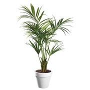 Künstliche Pflanze für Innen Kentia + Topf